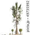 Trees of the mesozoic era isolated on white background 3D illustration 49735992