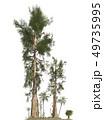 Trees of the mesozoic era isolated on white background 3D illustration 49735995