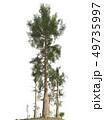 Trees of the mesozoic era isolated on white background 3D illustration 49735997