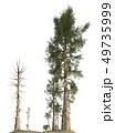 Trees of the mesozoic era isolated on white background 3D illustration 49735999