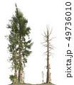 Trees of the mesozoic era isolated on white background 3D illustration 49736010