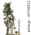 Trees of the mesozoic era isolated on white background 3D illustration 49736012