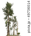 Trees of the mesozoic era isolated on white background 3D illustration 49736014