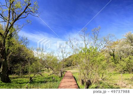 小網代の森(春) 49737988