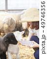 女性 羊 農家 49746356