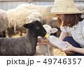 女性 羊 農家の写真 49746357