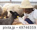 女性 羊 農家 49746359