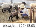 羊 農家 ひつじ 49746363