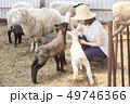 女性 羊 農家 49746366