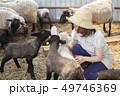 女性 羊 農家 49746369