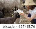 女性 羊 農家 49746370