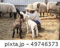 女性 羊 農家 49746373