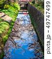 春の京都 哲学の道 49747499