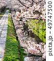 春の京都 哲学の道 49747500