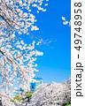 東京 千鳥ヶ淵の桜 49748958
