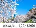 東京 千鳥ヶ淵の桜 49748960
