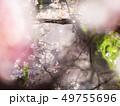 桜イメージ 哲学の道 49755696