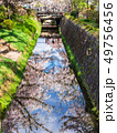 京都 哲学の道 水鏡の桜 49756456
