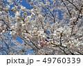春 桜 花の写真 49760339