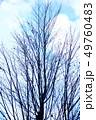 冬の風景 寒空にカツラの裸木 49760483