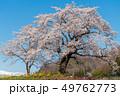 一目千本桜 桜 春の写真 49762773