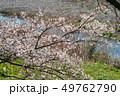 一目千本桜 桜 春の写真 49762790
