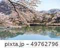 一目千本桜 桜 春の写真 49762796