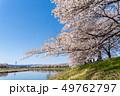 一目千本桜 桜 春の写真 49762797