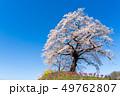 一目千本桜 桜 春の写真 49762807