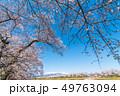 一目千本桜 桜 春の写真 49763094