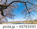 一目千本桜 桜 春の写真 49763095