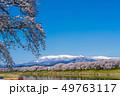一目千本桜 桜 春の写真 49763117
