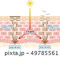 ターンオーバー 肌 断面図   49785561