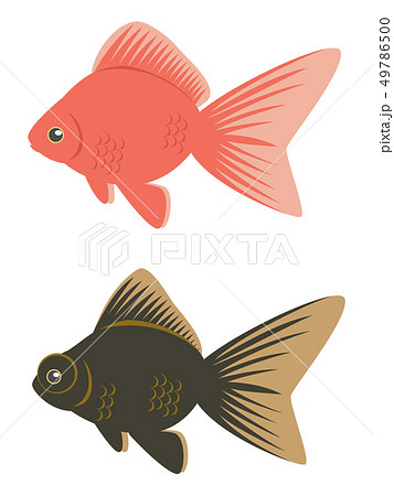 金魚(琉金・出目金)セットのイラスト素材 [49786500] - PIXTA