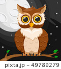 ふくろう フクロウ 梟のイラスト 49789279