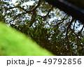 水面に映る、木々 苔 49792856