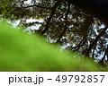 水面に反射する樹木 苔 49792857