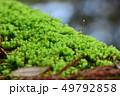 緑の苔 アップ 49792858