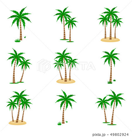 Palm Tree Vector Set 49802924