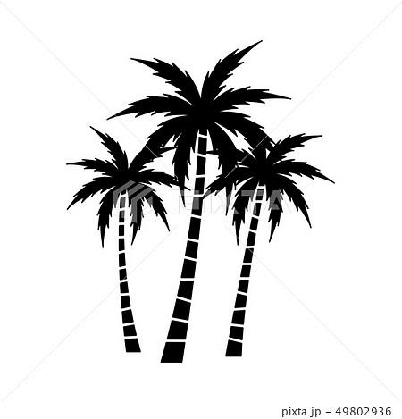 Palm Tree Vector Set 49802936
