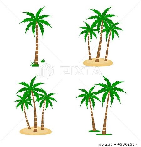 Palm Tree Vector Set 49802937