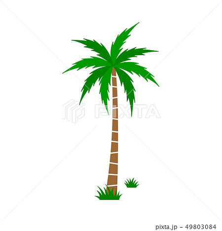 Palm tree Vector Set 49803084
