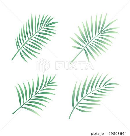 Tropical Leaves Vector 49803644