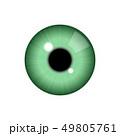 目 眼 リアルのイラスト 49805761