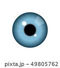 目 眼 リアルのイラスト 49805762
