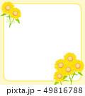 ひまわり 向日葵 フレームのイラスト 49816788