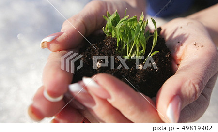 Woman Hands Holding a Little Green Sprout. A woman holds a sprouting sprout with black earth in her 49819902