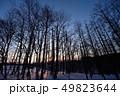 夜明けの森(北海道) 49823644
