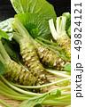 生山葵 山葵 野菜の写真 49824121