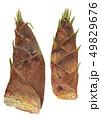 Phyllostachys heterocycla モウソウチク(たけのこ) 49829676